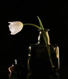Tulip in a bottle Stock Image