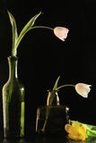 Tulip in a bottle Royalty Free Stock Photo