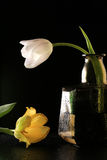 Tulip in a bottle Royalty Free Stock Photography