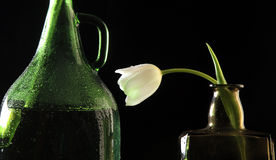 Tulip in a bottle Stock Images