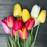 Tulip bouque Stock Photo