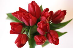 Tulip bouquet Royalty Free Stock Images