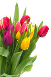 Tulip Bouquet Royalty Free Stock Photos