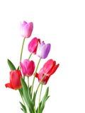 Tulip Bouquet Stock Images