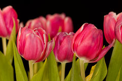 Tulip bouquet Stock Photos