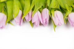 Tulip bouquet Royalty Free Stock Photo