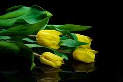 Tulip Bouquet amarela imagens de stock