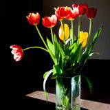 Tulip bouquet in backlight Royalty Free Stock Photography