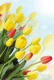 Tulip bouquet card Stock Photo