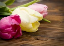 Tulip bouquet Stock Photo