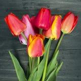 Tulip bouquet on dark wooden background Stock Photography