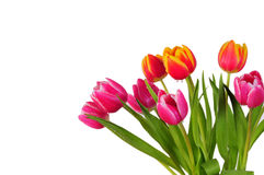 Tulip bouquet spring Easter Royalty Free Stock Image