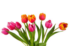Tulip bouquet spring Easter Stock Images