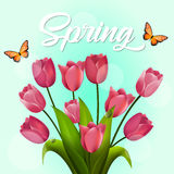 Tulip bouquet. Vector illustration. Spring flowers isolated on blue background. Stock Photos