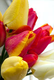 Tulip bouquet. On white wooden background Royalty Free Stock Images
