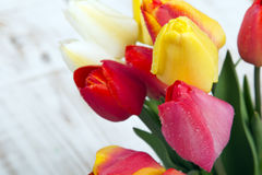 Tulip bouquet on white wooden background, Stock Image
