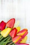 Tulip bouquet on white wooden background Stock Photos