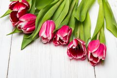 Tulip bouquet on white wooden background, Royalty Free Stock Photo