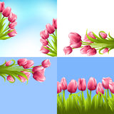 Tulip bouquets set Stock Images