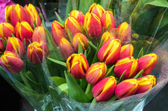 Tulip Bouquets Stock Photography