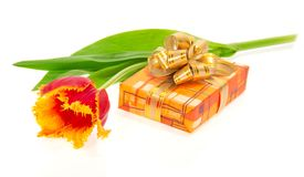 Tulip and box with a gift Royalty Free Stock Photography