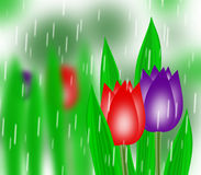 Tulip buds. Spring tulip buds in garden stock illustration