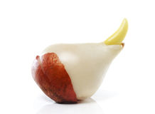 Tulip Bulb Royalty Free Stock Photography