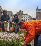 Tulip Bulb-festival over de Dam in Amsterdam Stock Afbeelding