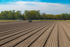 Tulip bulb field with bare soil and tractor after harvest, Holland Royalty Free Stock Photo