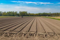 Tulip bulb field with bare soil and tractor after harvest in Holland Royalty Free Stock Images