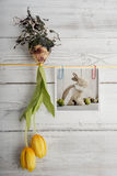 Tulip bulb and picture with easter bunny hanging on ribbon Stock Photo