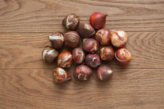 Tulip bulbs for gardening. Close up tulip bulbs on wooden background Royalty Free Stock Photography