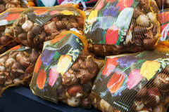 Tulip bulbs packed in big colorful bags, Amsterdam Stock Photography