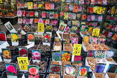 Tulip bulbs for sale. In a flower market in the Netherlands Stock Photography