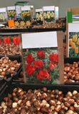 Tulip bulbs for sale at flower market, Amsterdam Stock Image
