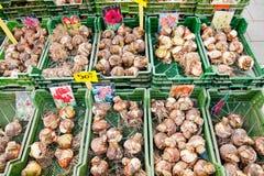 Tulip bulbs sales on street market Stock Photos