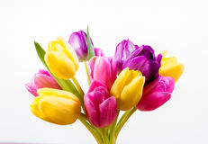 Tulip Bunch Royalty Free Stock Photography