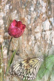 Tulip and butterfly Stock Image