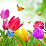 Tulip with butterfly Royalty Free Stock Image