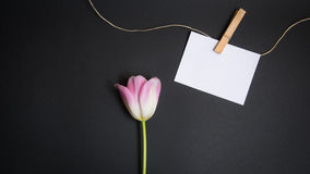 Tulip and card for free text. Tulip and a card for free text in front of black background Stock Image