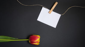 Tulip and card for free text. Tulip and a card for free text in front of black background, minimalist design Stock Photos