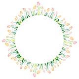 Tulip Circle Stock Afbeelding