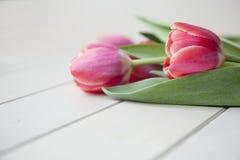 Tulip9 Stock Images