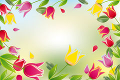 Tulip colorful card Stock Images