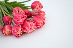 Tulip Columbus Terry Color: Red With White Edge Bouquet Royalty Free Stock Photos