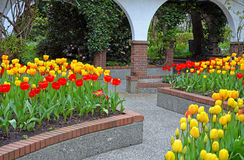 Tulip courtyard Royalty Free Stock Photography