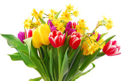 Tulip and daffodil Royalty Free Stock Image