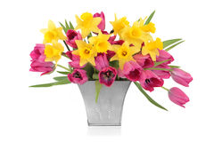 Tulip and Daffodil Beauty Royalty Free Stock Photos