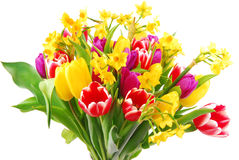 Tulip and daffodil bouquet Stock Images
