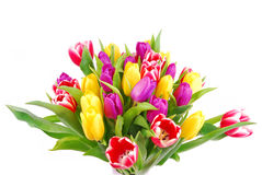 Tulip and daffodil bouquet Royalty Free Stock Photo